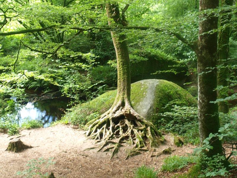Quelles sont vos pens es racines olivier magn tiseur dax - Comment tuer les racines d un arbre ...