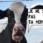Les produits laitiers sont nos amis pour la vie ?