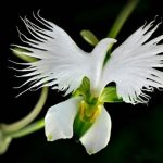 Des fleurs vraiment particulières